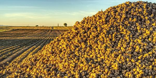 Biofolie suikerriet Biofolie mais | Intermail BV