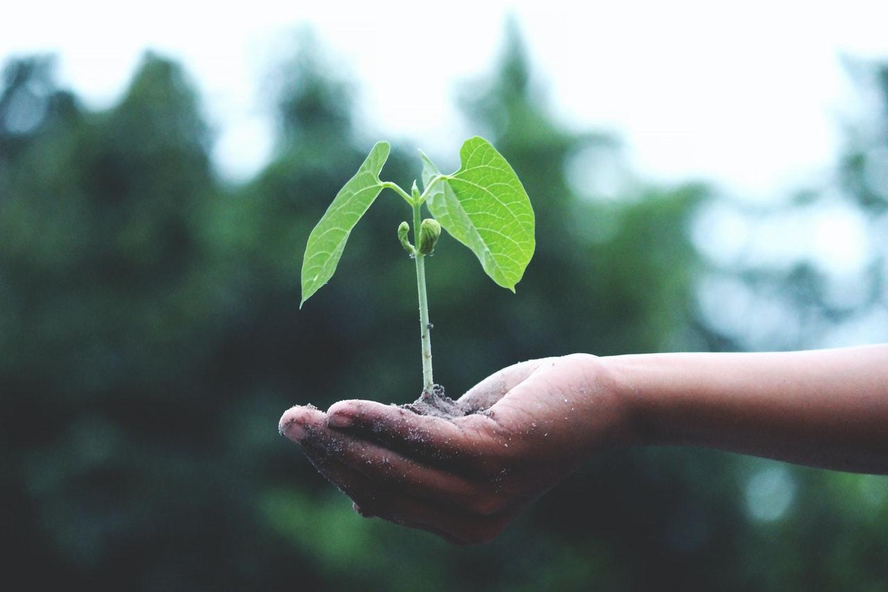 Groen en duurzaam communiceren | Intermail
